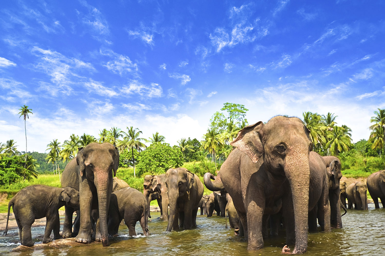 Sri-Lanka-travel-skyscanner-spring-break-deals