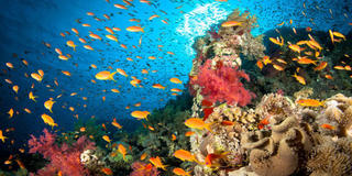 Hawaii Just Passed A Bill Banning Harsh Sunscreens To Preserve Coral Reefs