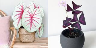 8 of the best indoor plants to buy online if you want to bring the outside in