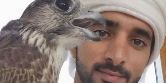 18 Photos Of HH Sheikh Hamdan With Adorable Animals