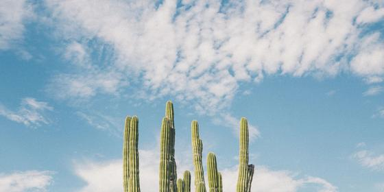 Meet the guys who just created the first vegan leather jacket made from a cactus