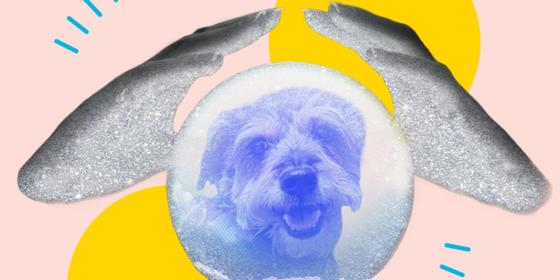 I tried to fix my dog with a pet psychic reading