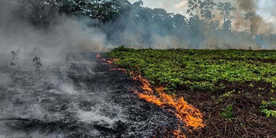 5 Shocking Ways The World Would Suffer If The Amazon Rainforest Is Destroyed