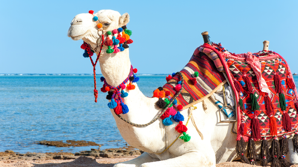 7 Reasons Egypt Needs to Be on Your Bucket List