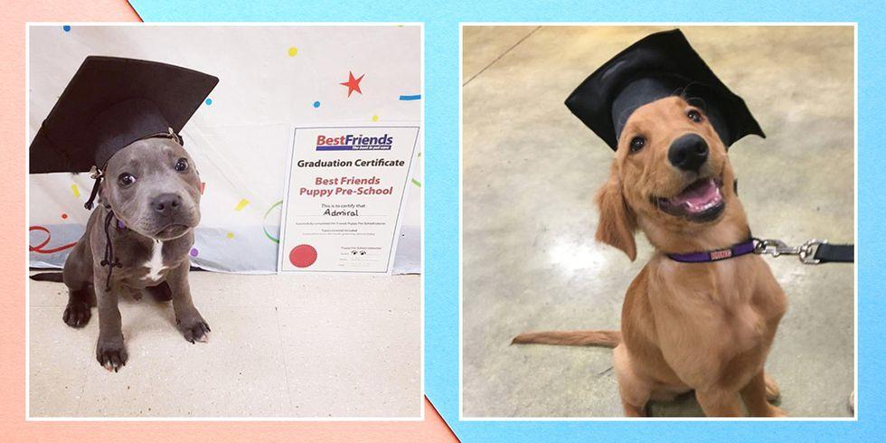If You've Just Graduated, Please Do Enjoy These 9 Dogs In Grad Caps
