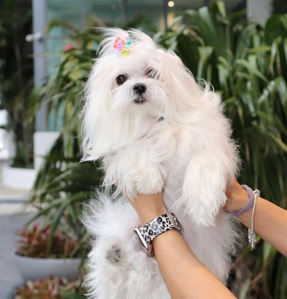 Dog Lovers, Here's Where To Pamper Your Pooch In Dubai
