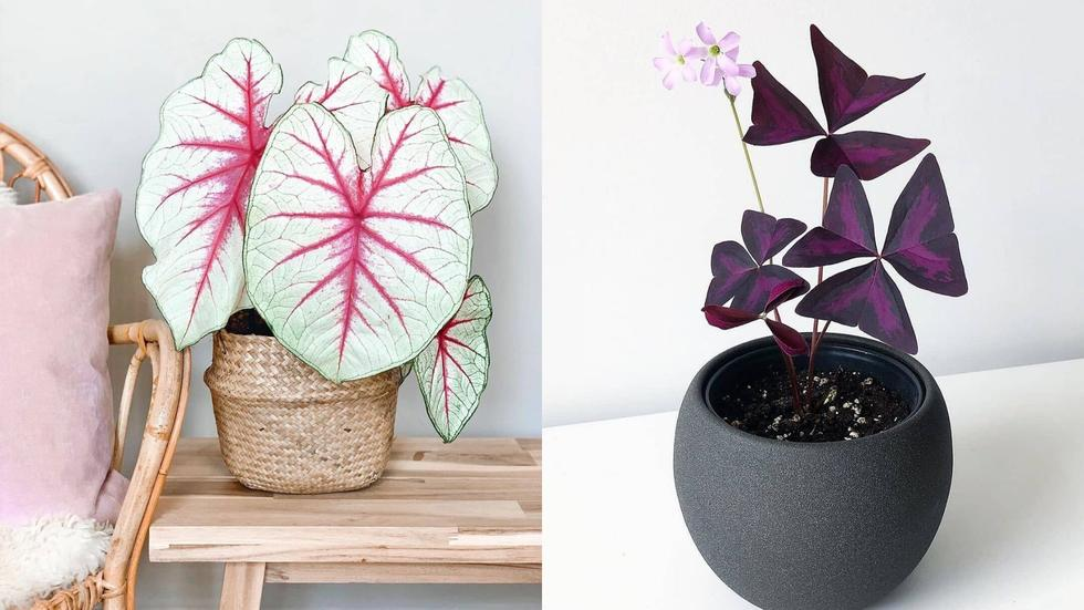 House Plants to buy online, Artificial plants to buy online, The best house plants to put indoors, House plants